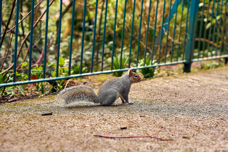 Side view of squirrel sitting on ground