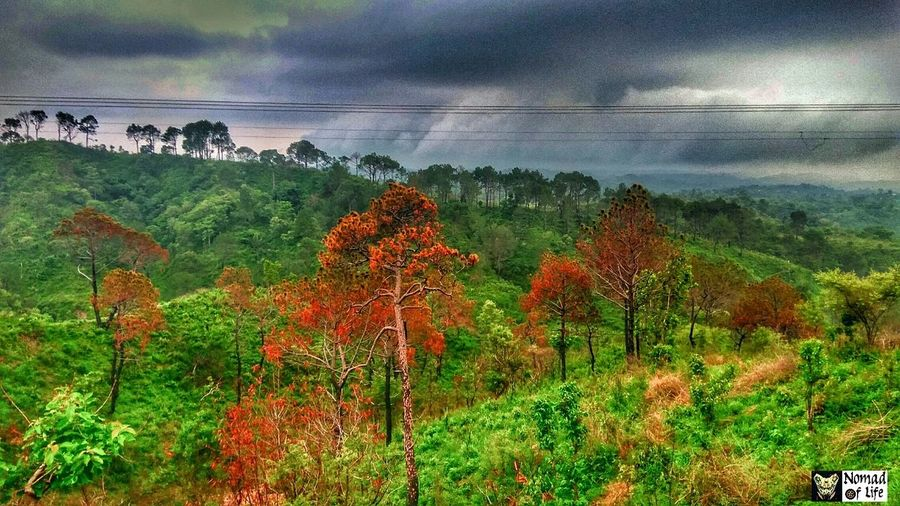 Rainy season Nature Beauty In Nature Agriculture Outdoors Growth No People Rural Scene Tree Scenics Landscape Plant Day Sea Water Sky Horizon Over Water Freshness Dramatic Sky Highway Roads Travel Photography Freshness Nature Agriculture Beauty In Nature