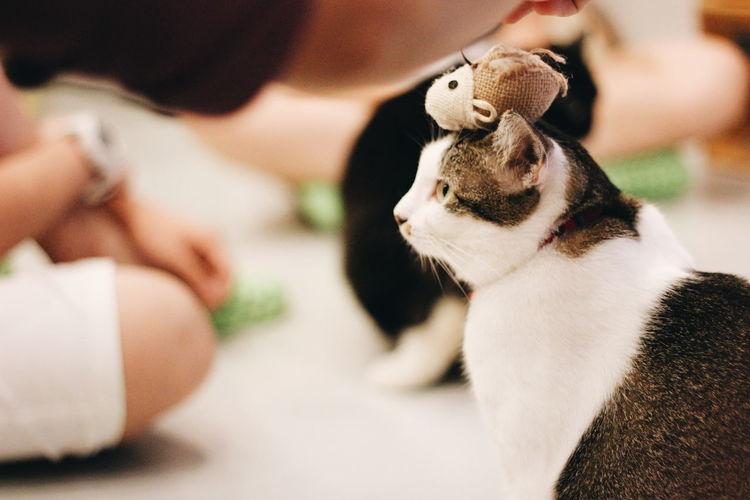 Pet toy on cat's head