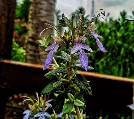 Thoth Hathor Yeni Gaziantep Güzel Flower Head Flower Close-up Plant
