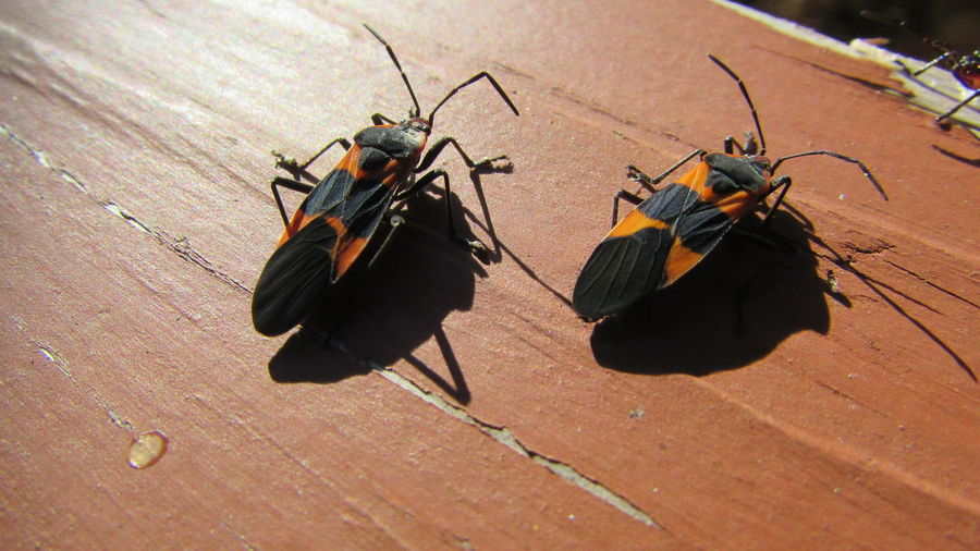 Taking Photos Insect Photography Bright Colors Orange Color Have No Idea What These Are Macro Nature Cadillac Michigan