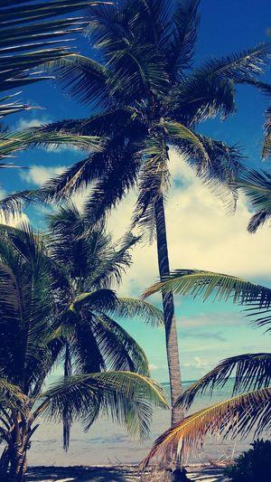 Domonikana, Punta Cana, Karaiby