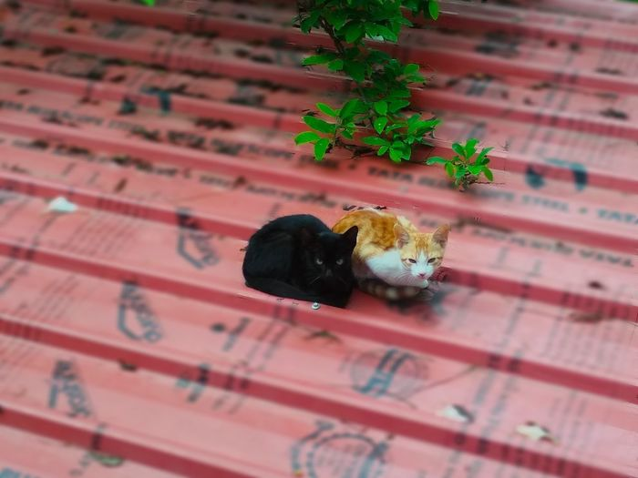 The Cats Black Black Cats Are Beautiful Animals Colors Contrast Plant Part Roof Top Cat Cats Black Cat Golden Cat Two Animals Resting Twins Cats Of EyeEm Cats 🐱 Sleepy Kitty Afternoon Leaf Animal Themes Plant