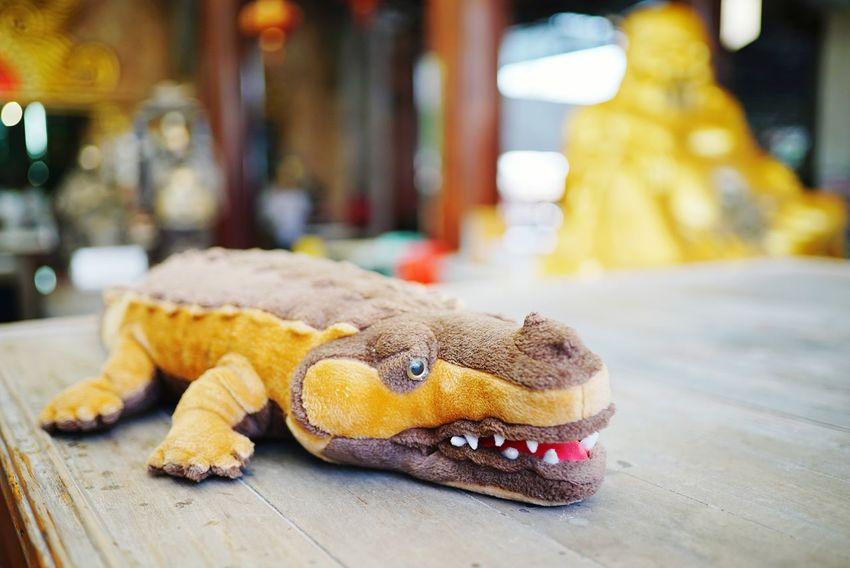 """""""Frightened monkey"""" crocodile dall. Crocodile Dall Funny EyeEm Selects Reptile Iguana Close-up Alligator"""