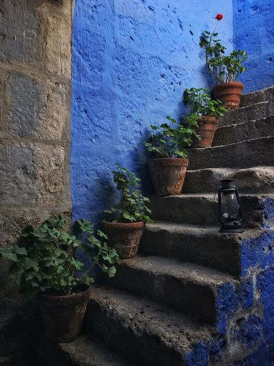 Flower pots on a steps Arequipa Nunnery Monastery Convent Andes Peru IPhone Traveling Travel Flowers Blue
