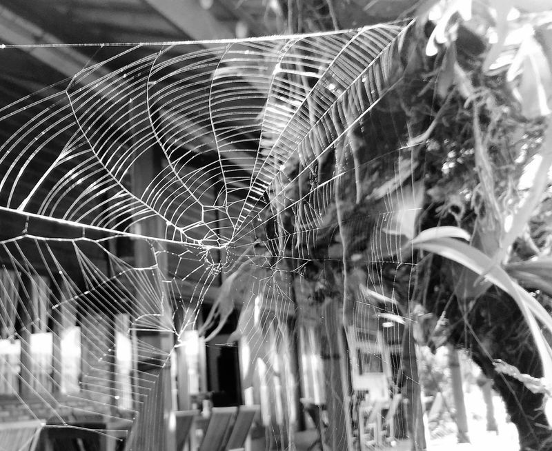 No People Long Exposure Outdoors Day Nature Close-up Fragility Freshness Spider Web Nature Tangerang, Indonesia Bsd City Serpong Zenfonezooms zenfonezooms AsusPixelMaster Asus Zenfone Photography