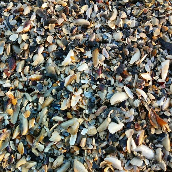 Seapattern Sea Odessa Od_insta одесса Pattern Море Shellpattern Stonepattern Shellsandstones узор ракушки камушки