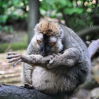 Yamyam im Zoo Jaderberg . Gute n8 :)