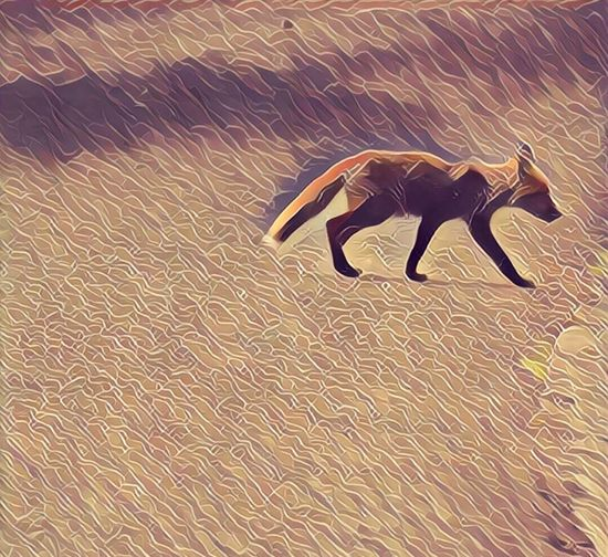 Hello World Lets Experiment Animal Themes Filter Mr Fox EyeEmBestPics Eye4photography  EyeEm Gallery EyeEm Nature Lover Check This Out What Do You Think? Do You Like It?