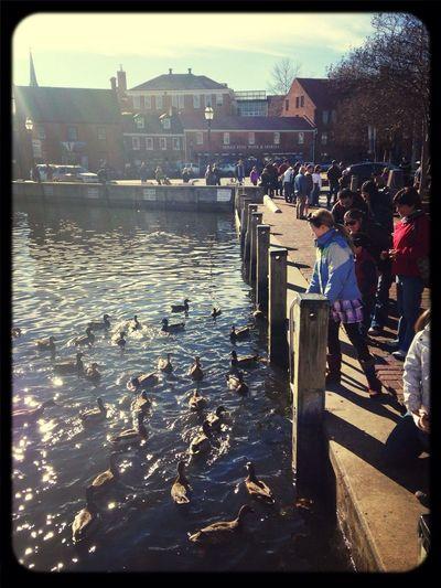 Feeding Ducks Down By The Water Ego Alley