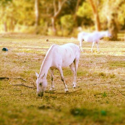 Un caballo en la mañana Animals