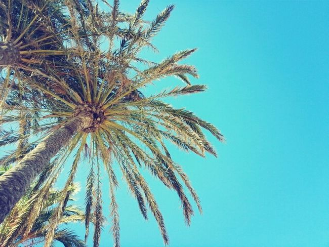 palms in your head Relaxing On The Beach