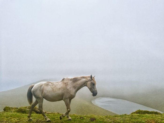 Horse walking above lake