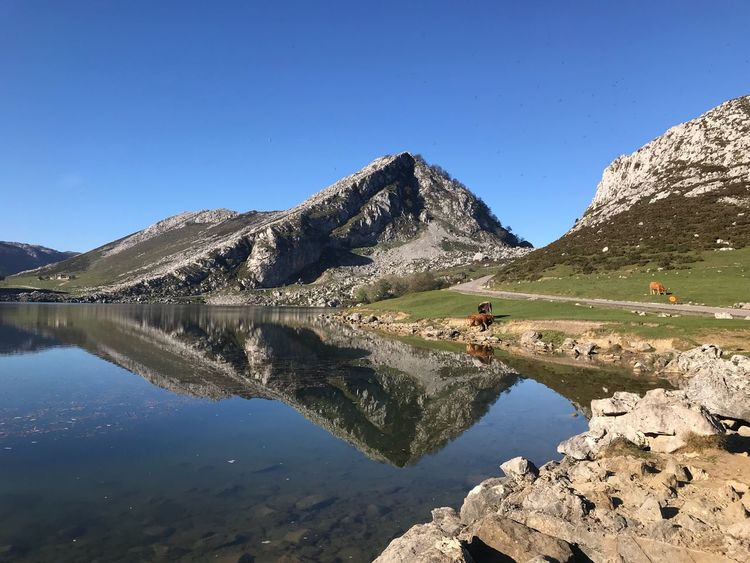 Covadonga Lakes  Nature Photography Nature Photography Beautiful Nature Reflections Reflections In The Water SPAIN Cows Mountain Perspectives On Nature Perspectives On Nature