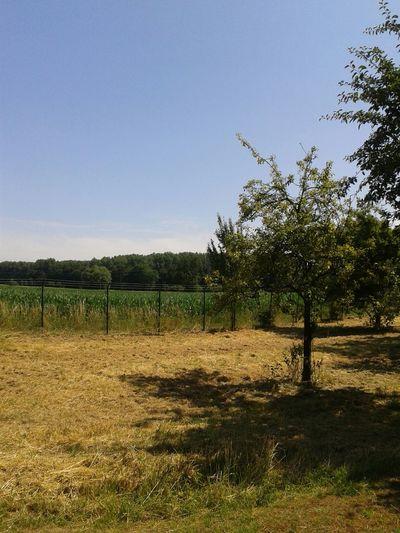 Draußen Im Grünen in NRW Nordrhein-Westfalen Deutschland Natur Pur Sommer Sonne Sonnenschein :P Landschaft Landscape Summer Views