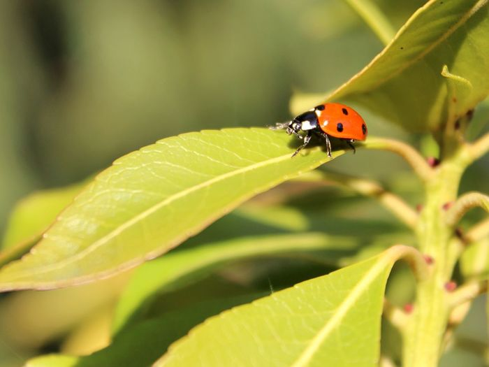 Ladybug's road