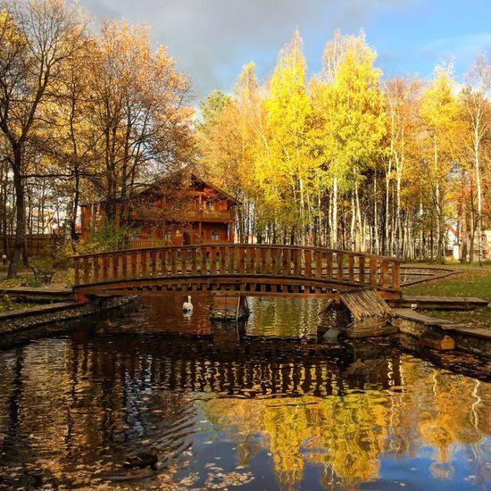 краски осени Autumn