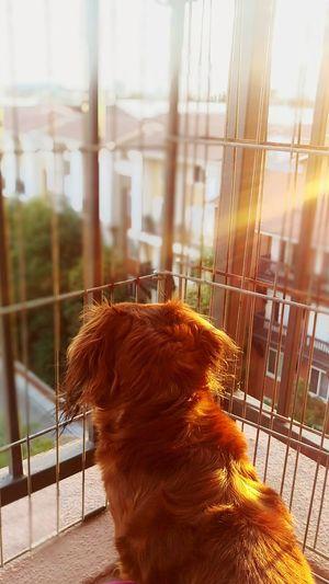 Sunset Sunrays Warmthandsunshine Hello World Hanging Out Enjoying Life EyeEm Gallery Best Shots EyeEm Warmth Dogslife Dashchund Longhairdontcare