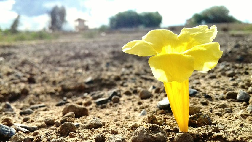 Flowers Peace Love Yellow Flower