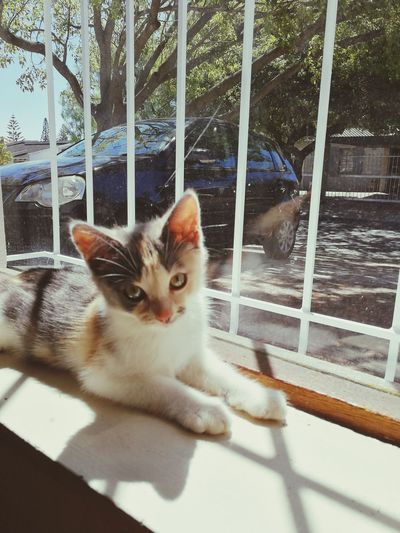 Bestcats_oftheworld Kitty Sunlight EyeEm Selects