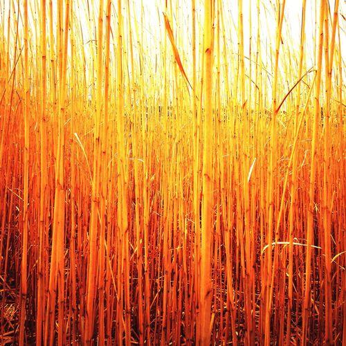 Orange By Motorola IPhoneography