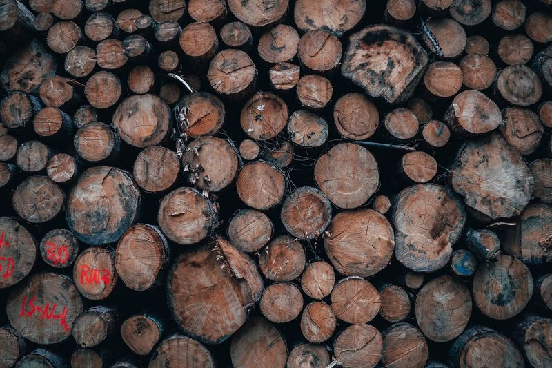 Wood Trees Warm Colors Woods Wood Forest Full Frame Lumber Industry Timber Backgrounds Wood Firewood Log Large Group Of Objects Forest Wood - Material No People Stack Textured  Tree Arrangement Nature Deforestation Environmental Issues Pattern Abundance