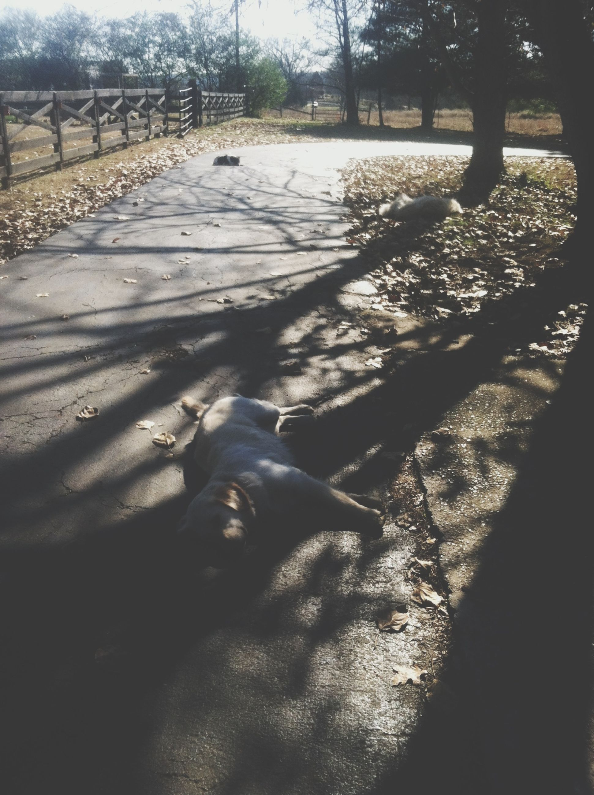 tree, shadow, sunlight, park - man made space, sand, transportation, high angle view, outdoors, day, incidental people, nature, road, street, animal themes, field, footpath, fence, the way forward