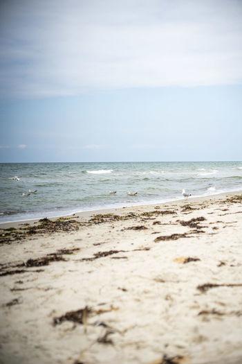 Auszeit an der Ostsee Baltic Sea Exploring Nature Naturschutzgebiet Ostsee Ostseeküste Travel Beach Beauty In Nature Day Horizon Horizon Over Water Idyllic Land Motion Nature No People Ocean Outdoors Sand Scenics - Nature Sea Sky Tranquil Scene Tranquility Water Wave