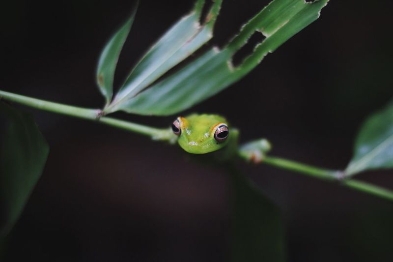 Close-Up Of A Frog On Stem