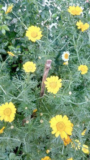 wallpaper garden Yellow Flower Leaves Full Frame Bamboo Plants Mobile Photography SSClickPics SSClicks SSClickpix