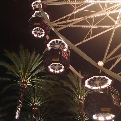 Ferris Wheel Palm Trees Nightphotography