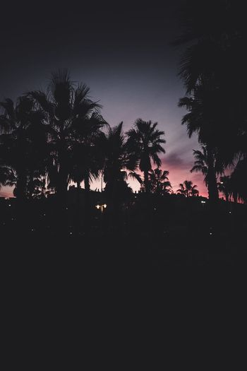 California Sunset California Tropical Climate Backgrounds Natural Beauty Sunset Silhouettes Palms Los Ángeles Palm Trees Palm Palm Tree Tree Silhouette Plant Sky Nature Dark No People Night Copy Space Outdoors Tranquility Sunset Beauty In Nature Tranquil Scene Dusk City Growth