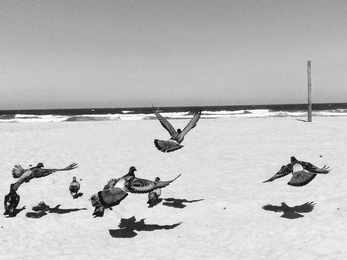 Vacations Animal Themes Birds Pigeons Noir Blackandwhite Flock Of Birds Sea Beach Horizon Over Water Sky Shore Sandy Beach Sand Large Group Of Animals
