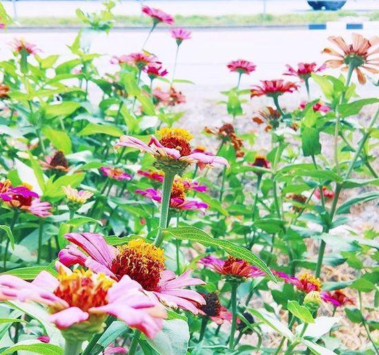 みどり - ピンク~ Flowers Colour Green Midori And Pink Photo Vscocam VSCO Vscogood Vscothailand Cool Happy Smile Lovely Picture Photographer Bangkok Thailand No Copy Lifestyle Me Bey .