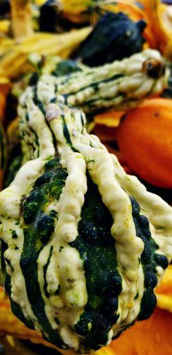Gourds & Pumpkins Fall Pumpkin Patch Backgrounds Artichoke Vegetable Market Close-up Food And Drink