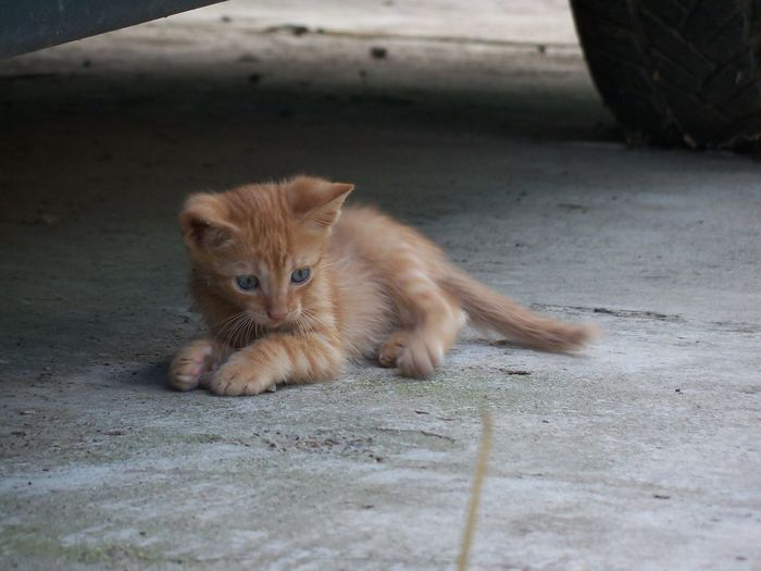 Alertness Animal Head  Animal Themes Cat Curiosity Day Domestic Animals Domestic Cat Feline Focus On Foreground Footpath Kitten Looking At Camera Mammal No People One Animal Outdoors Pets Stray Animal Street Whisker Zoology
