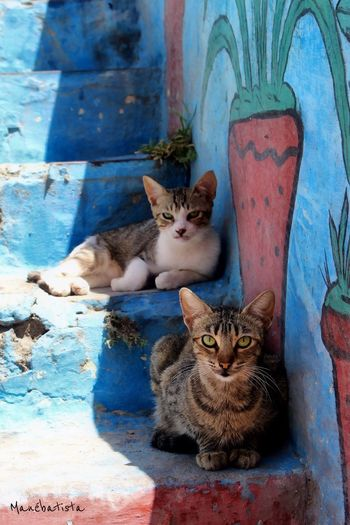 Domestic Cat Domestic Animals Feline Pets Cat Animal Themes Mammal Looking At Camera Portrait No People Day Sitting Relaxation Outdoors Kitten