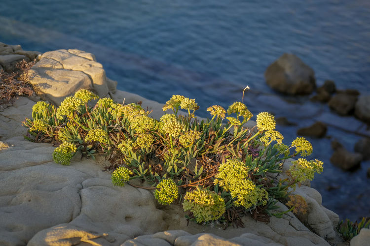 Rock Water Rock - Object Solid Nature Beauty In Nature Sea Plant No People Growth Day Tranquility Focus On Foreground High Angle View Close-up Land Outdoors Beach Flower Lichen