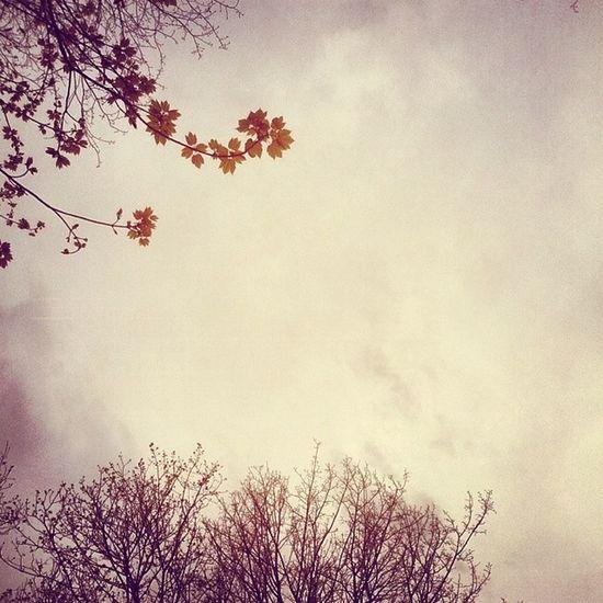 Photography Landscape Nature Tree عکاسی رنگی زیبا درخت برگ پاییز غربت غم گرفته حزن آلودخفقان