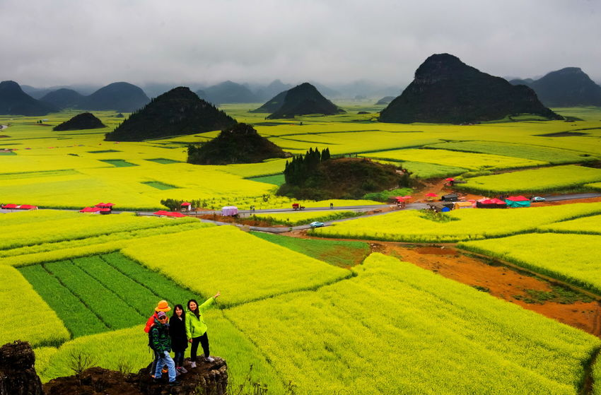 Canola field, rapeseed flower field with the mist in Luoping, China Luoping Rain Rapeseed Field Aerial View Agriculture Beauty In Nature Canola Canola Field Day Farm Farmer Field Fog Grass Green Color Growth Hill Landscape Men Mist Mountain Mountain Range Nature Outdoors Rapeseed Oil Rapeseed Yellow Tadaa Real People Rice Paddy Rural Scene Scenics Sky Terraced Field Tourism Tranquil Scene Two People Village Women Working