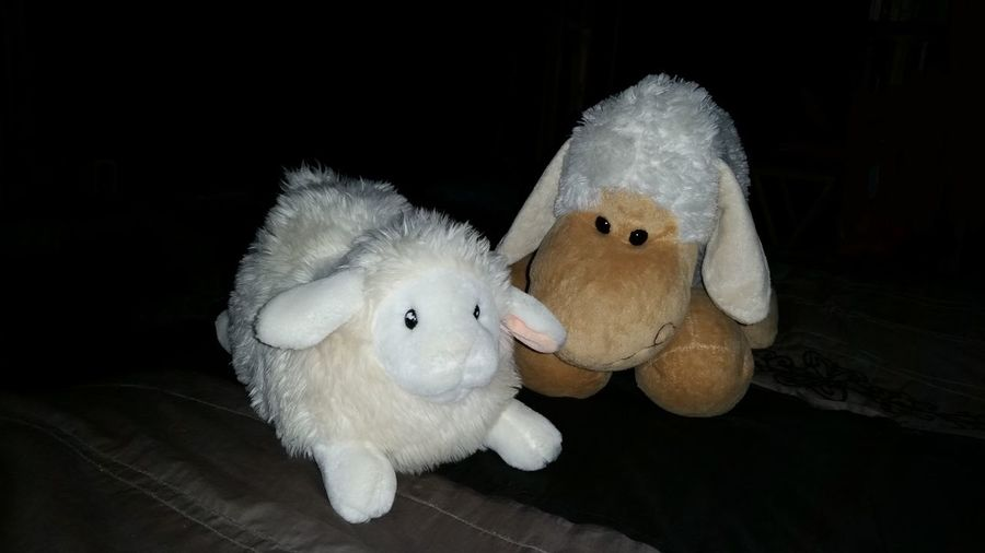 a flock of two just for you Childhood Cuddlebuddy Cuddly Indoors  Lambs No People Sheep Stuffed Animals Stuffed Toy Toy White Color