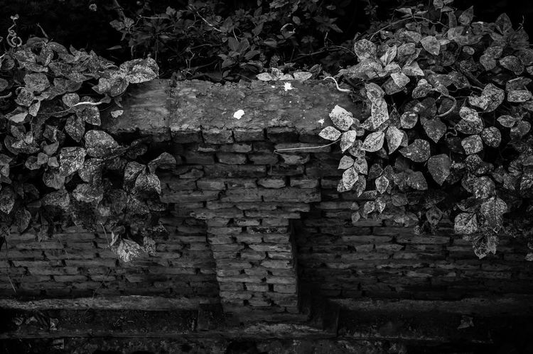 Rural rustic brick wall EyeEmNewHere EyeEm Nature Lover Black And White Friday Rural Scene Outdoors Nature Fence Close-up Built Structure Brick Wall Architecture Wall Rustic Rural Plant