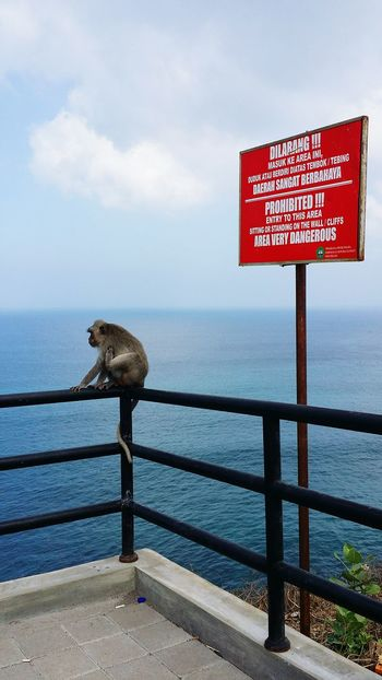 Monkey Monkeybusiness  Hanging Out Seaside Cliffside Uluwatu Nature Check This Out Don't Hold Me Back