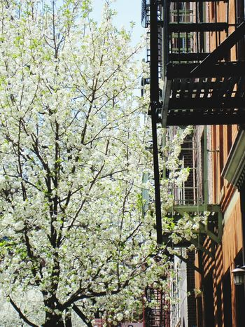 Urban Spring Fever New York Tenement Houses Lower East Side NYC Lower East Side