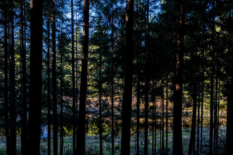 Autumn Beauty In Nature Dark Day Forest Lake Nature No People Outdoors Silhouette Sweden Water