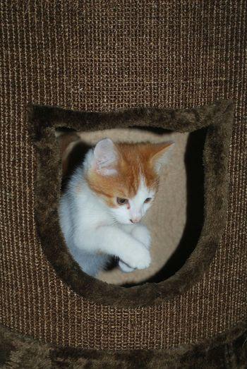 Kittenoftheday Kittensofinstagram Kitten My Kitten