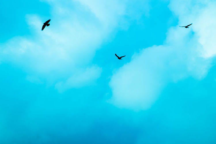 Animal Themes Animal Wildlife Animals In The Wild Beauty In Nature Bird Cloud - Sky Day Flying Low Angle View Mid-air Nature No People One Animal Outdoors Sky Sky And Clouds Sommergefühle Spread Wings Summer Unrealistic EyeEm Selects