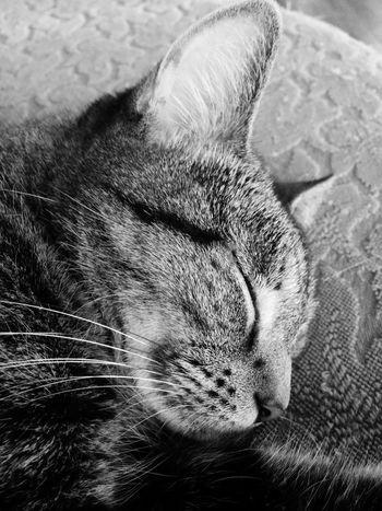 Lilu Dallas Cat Nap Pets