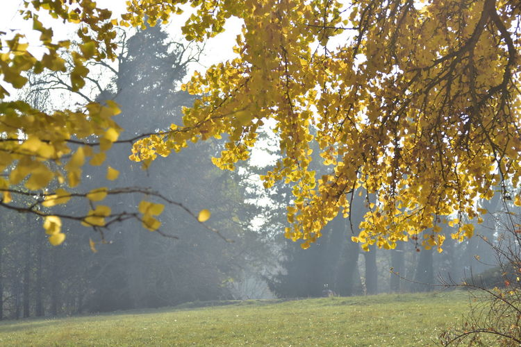 Plant Tree Autumn Beauty In Nature Growth Yellow Change No People Grass Field Landscape Plant Part Leaf Autumn Collection Fall