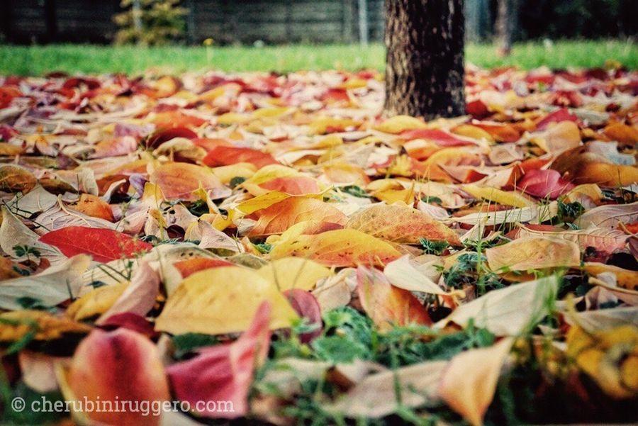 E poi, anche per me, il resto non fa differenza stretto tra le foglie. Autumn Change Outdoors Nature Tree Cherubini Ruggero Foglie Foglieautunnali